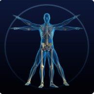The Body Human
